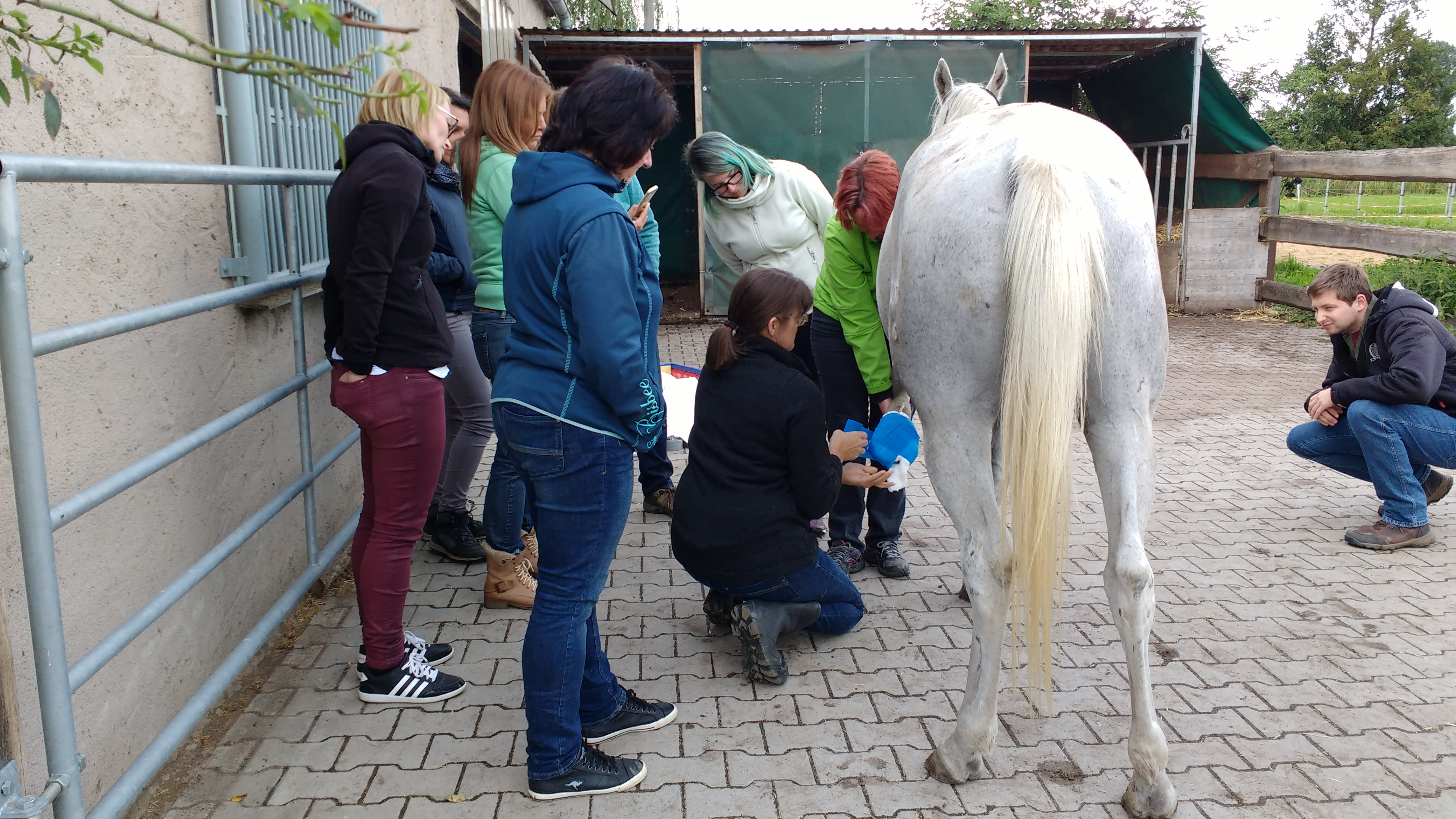erste hilfe pferd